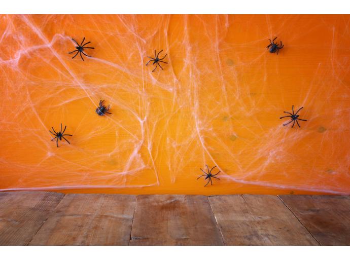 Effrayez vos invités pour la soirée d'Halloween en invitant les araignées chez vous !